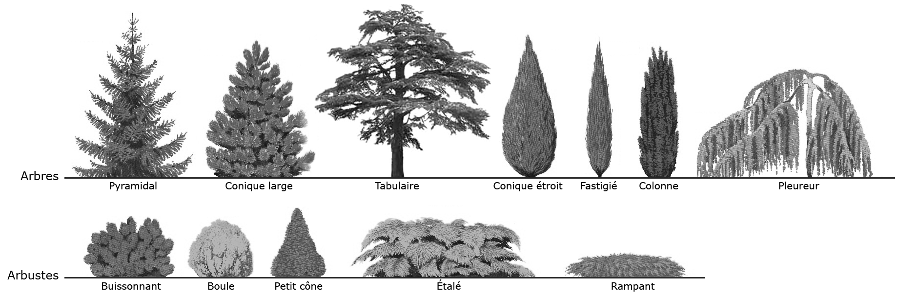 141012_formes_arbresB_02