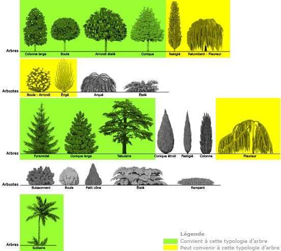 formes_arbres eclairage illumination americaine