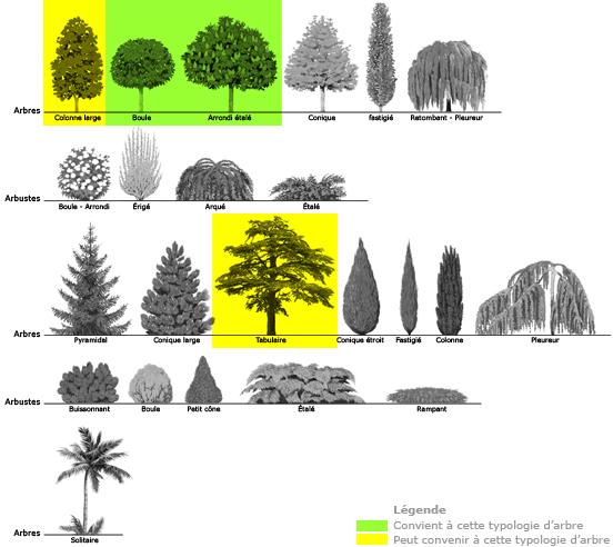formes_arbres_eclairage illumination a la francaise