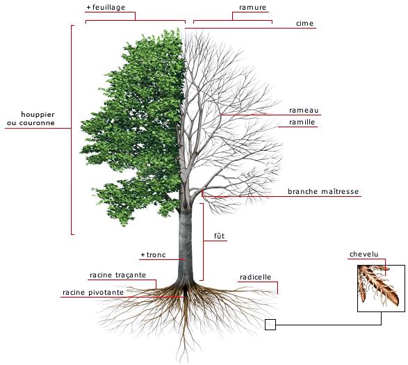 structure-arbre